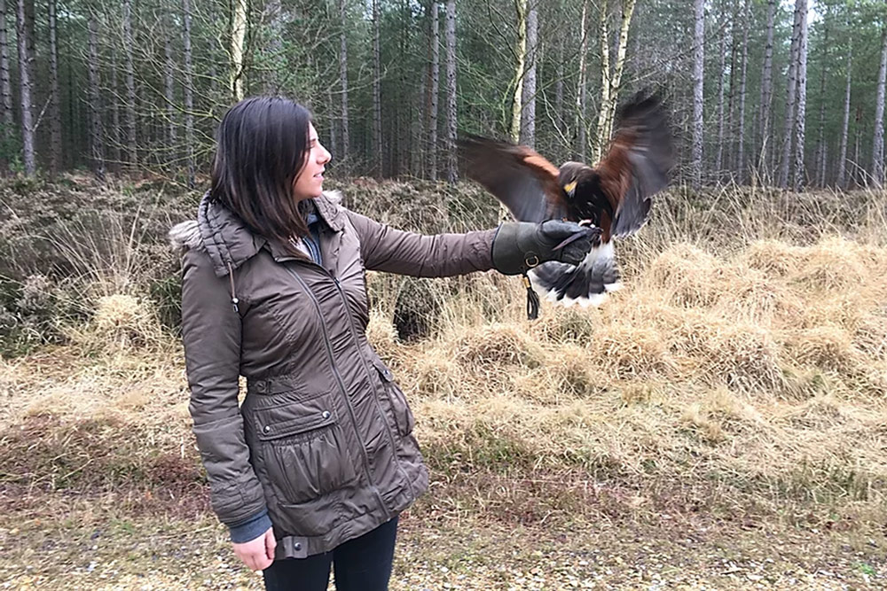 falconry experience days in hampshire