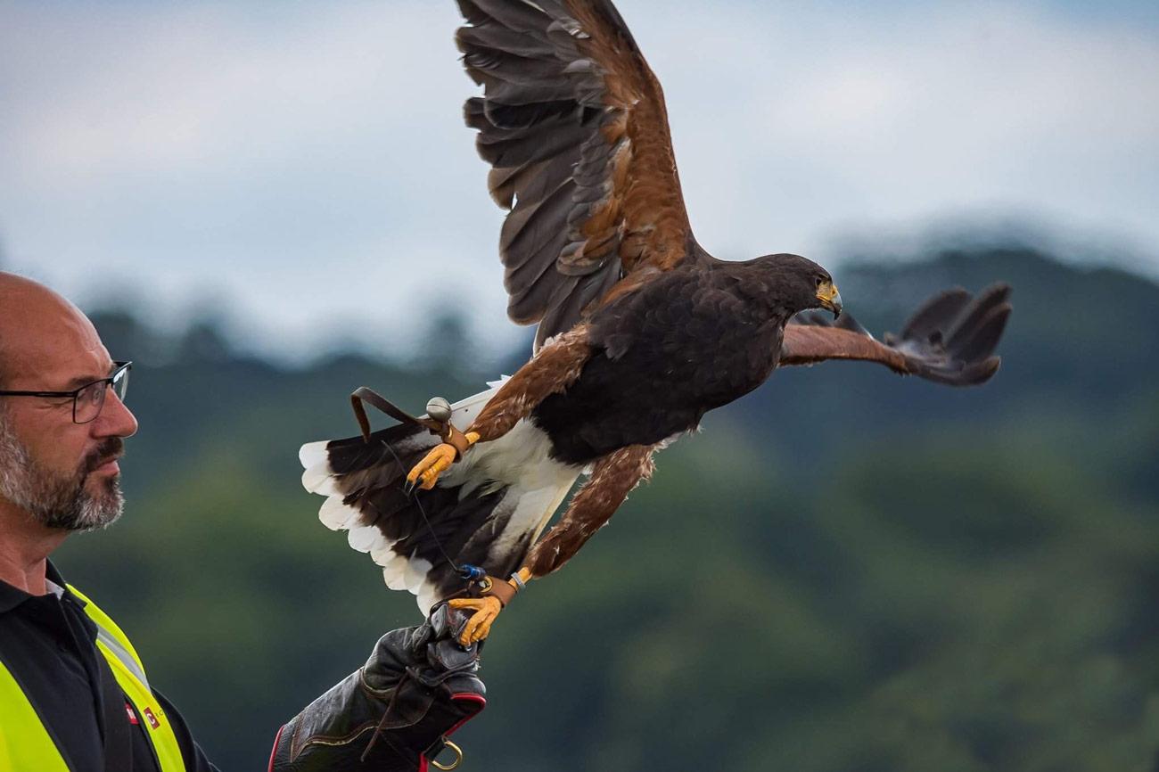 Is Falconry Cruel?