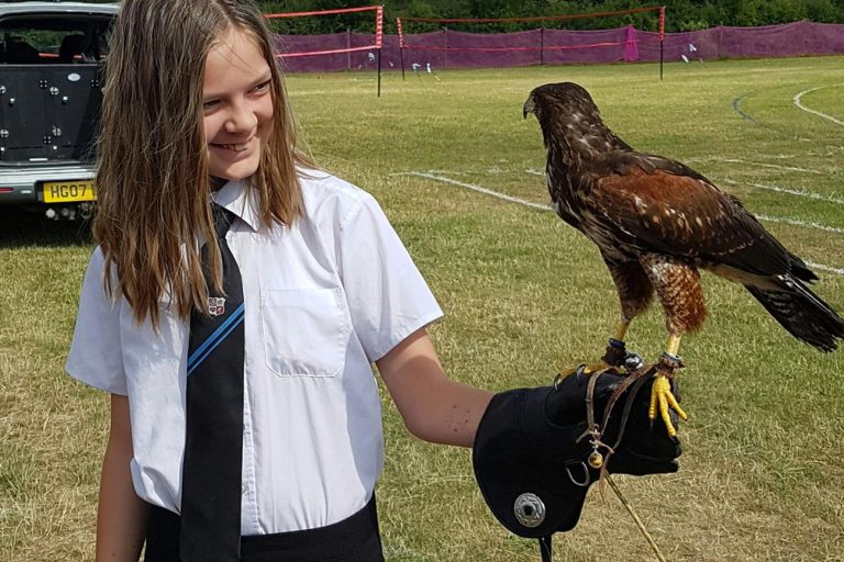 falconry school visits