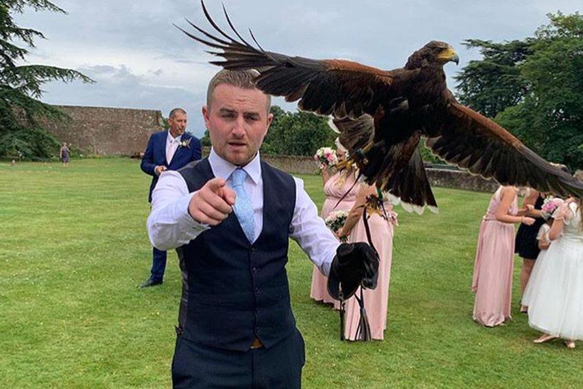 flying falcons at weddings