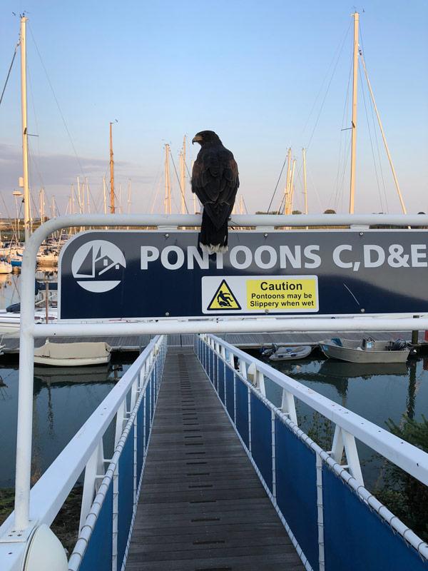 bird control for marinas