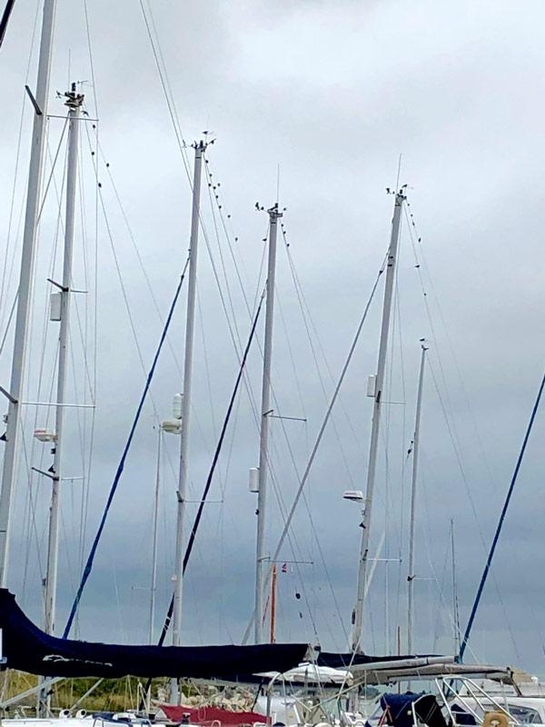 stop starlings roosting at marina