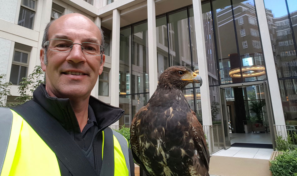 falconry for shopping centres and residential